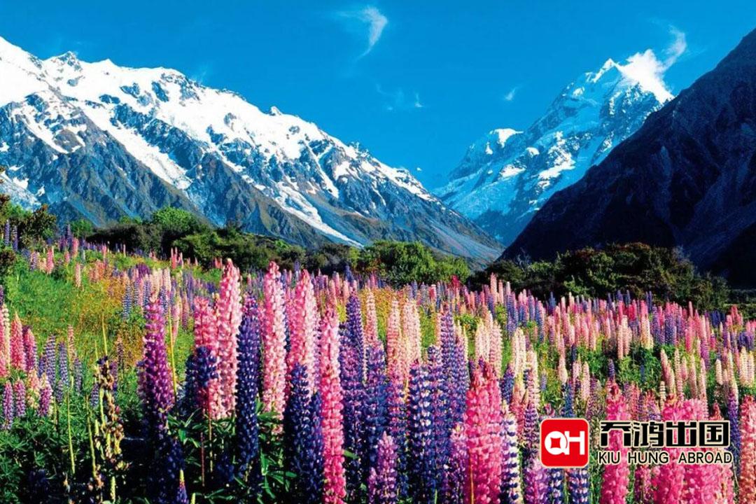 新西兰投资移民政策是什么?办理新西兰移民要什么条件